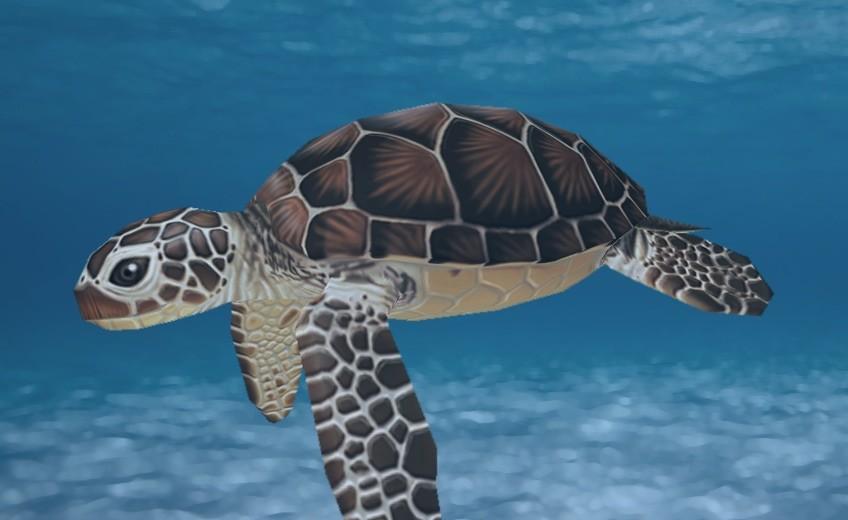 Cordelia wolf sea turtle bg orig