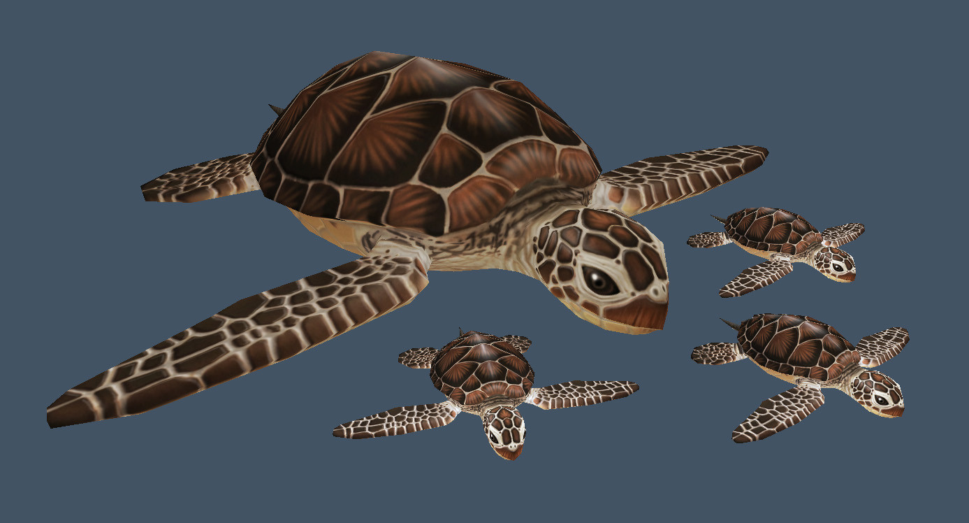 Cordelia wolf seaturtle tex1a