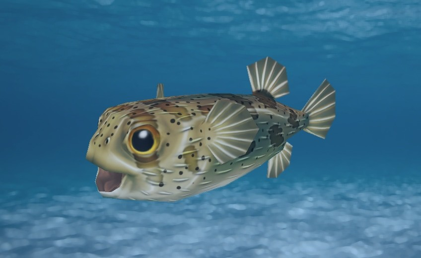 Long-Spine Porcupinefish
