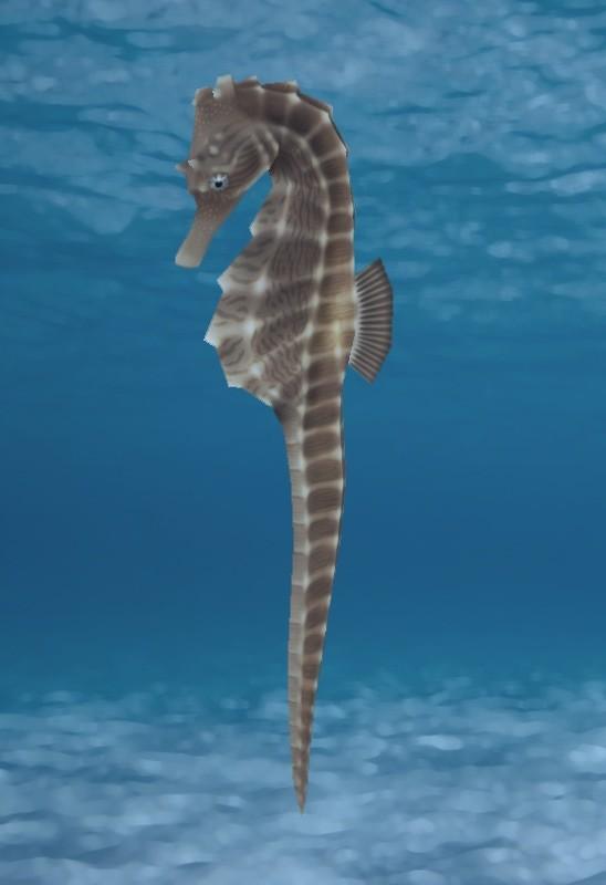 Cordelia wolf seahorse bg orig