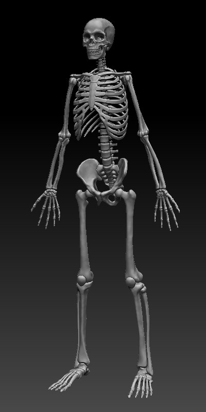 Skeleton sculpt