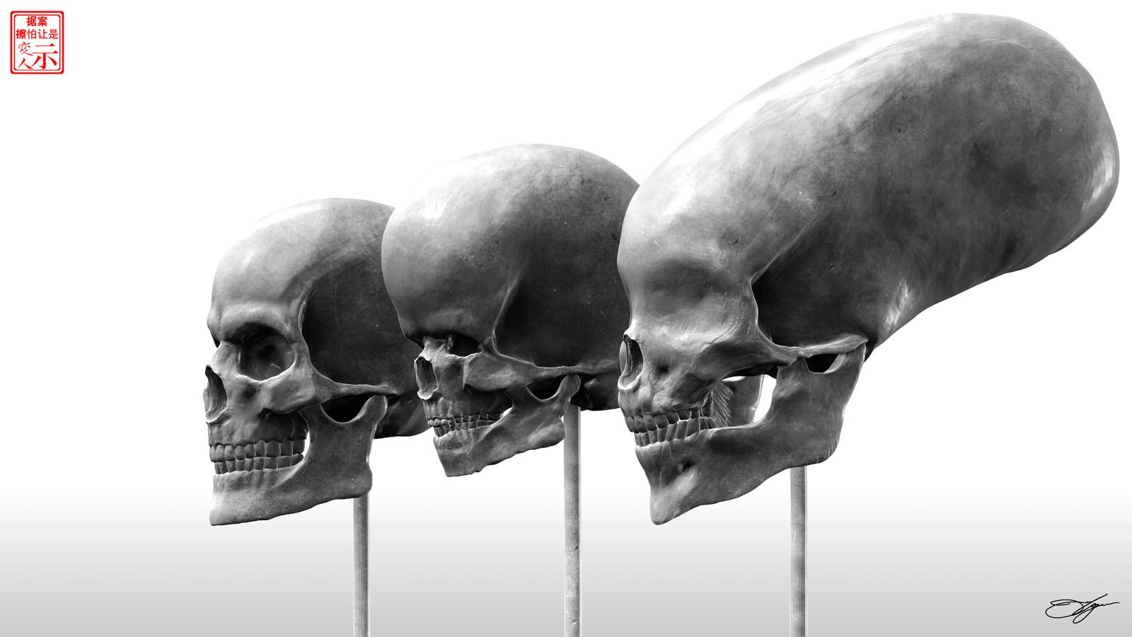 Human & Fictional Skull Study