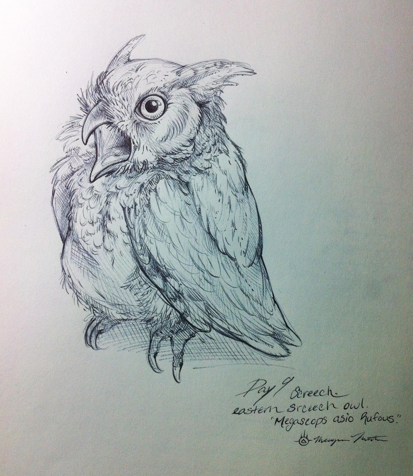Day 9- Eastern Screech Owl