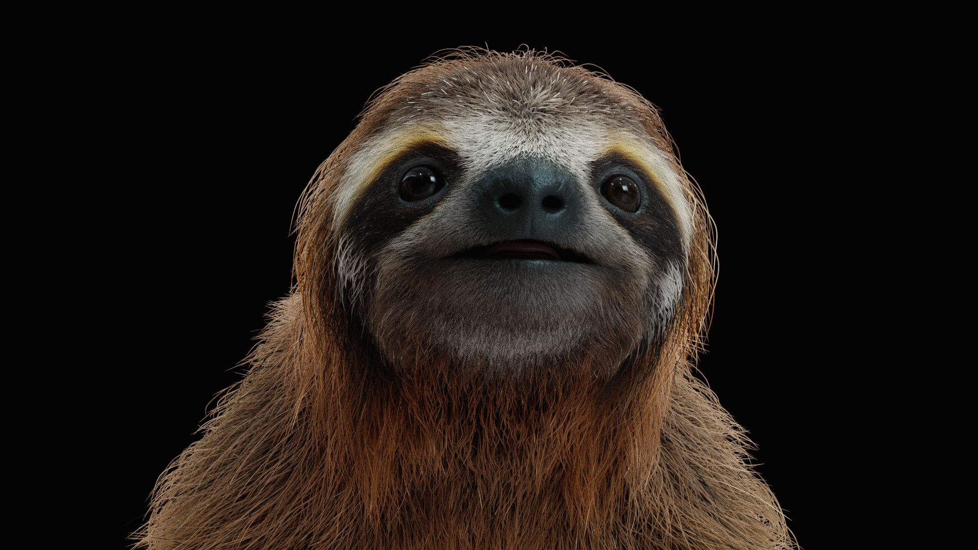 Clement granjon sloth face