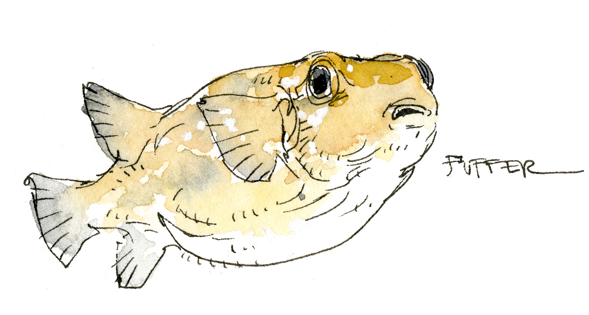 Peter han fish2