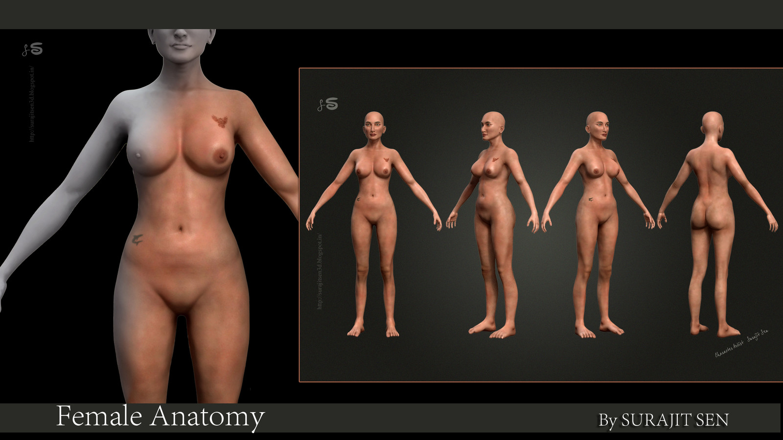 """Female anatomy_3D_Model_WIP_SNAPS _ by Surajit Sen   Here I am sharing  Profile snap (Basic-render) of my recent R&D Subject """"Female anatomy"""". (Modeling-Sculpting-Texturing-Basic Lighting-rendering-NO Shading)"""