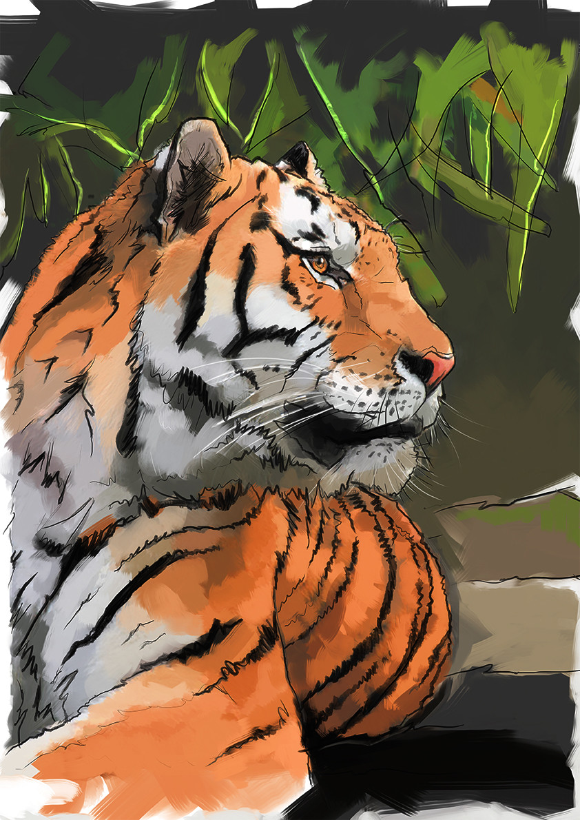 Alex tsoucas tiger sketch hue72