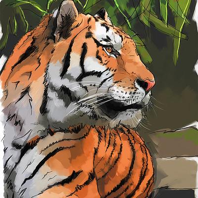 Alex tsoucas tiger sketch hue72