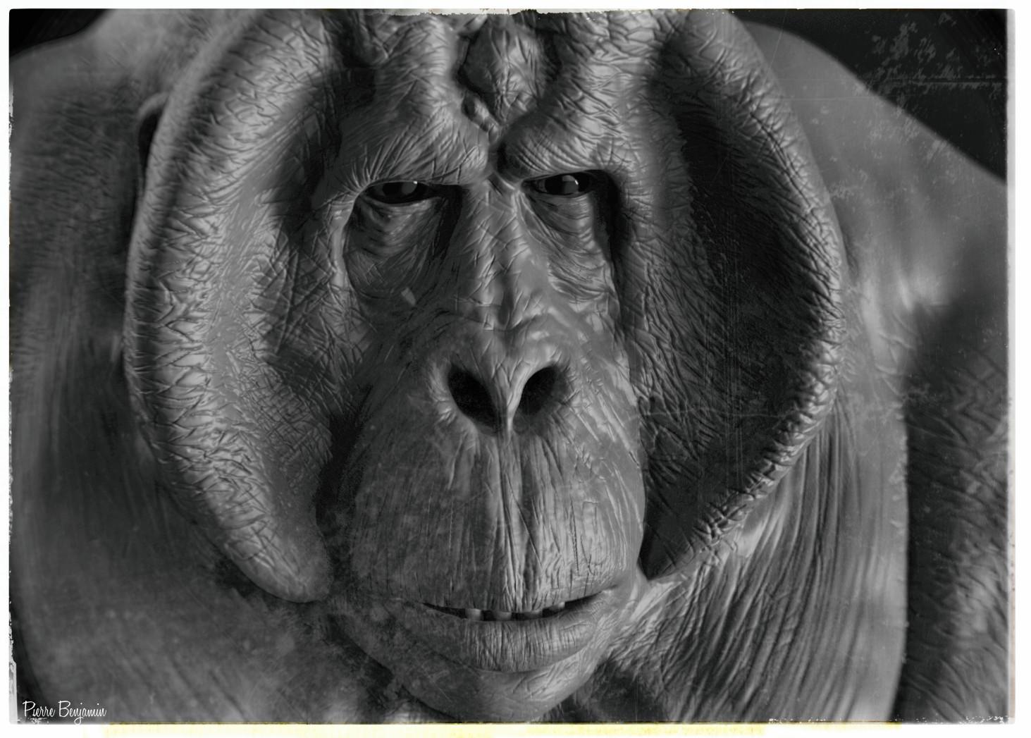 Pierre benjamin orangutan scene 001 244240sss
