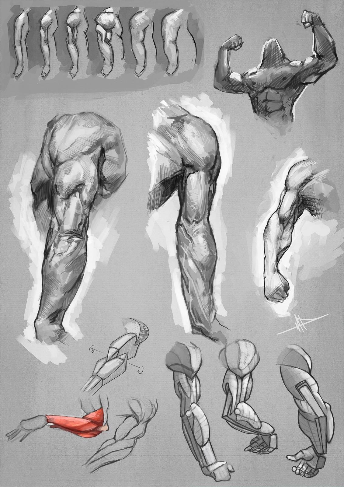 Arms study