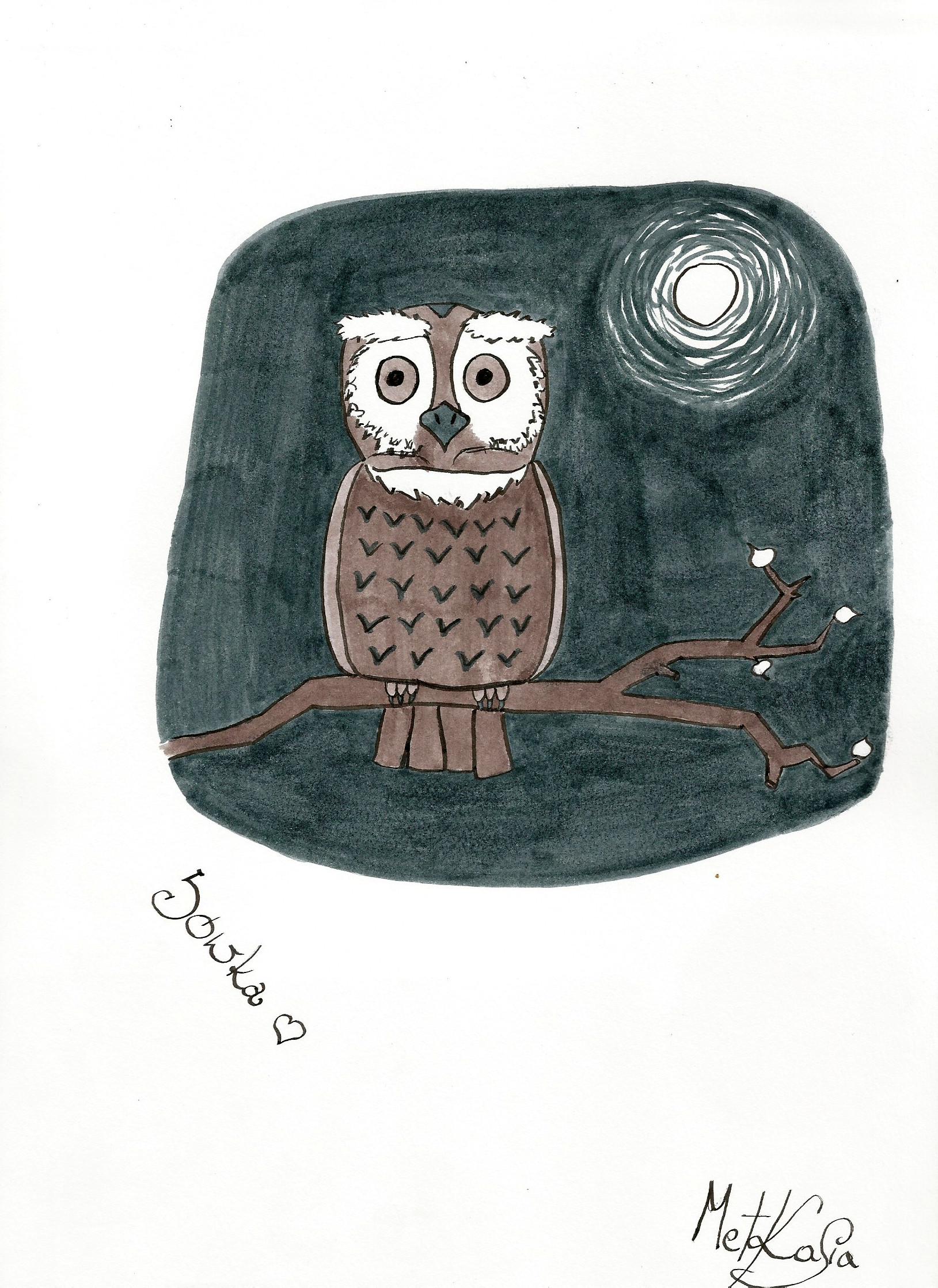 Kasia michalak sowka sowa owl
