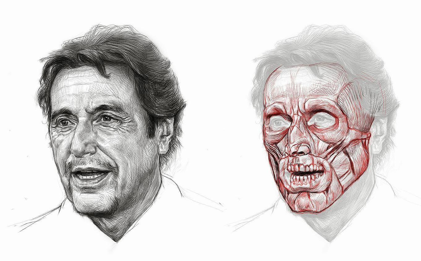 Josh Tiefer - Facial Anatomy study