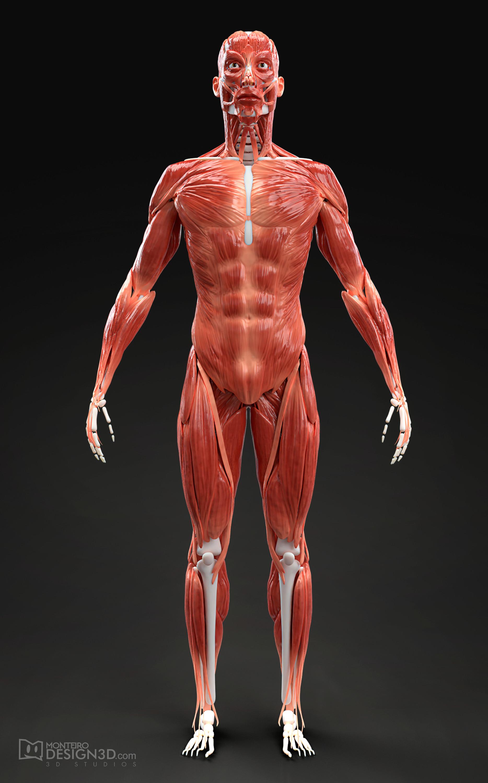Alisson monteiro estrutura muscular masc