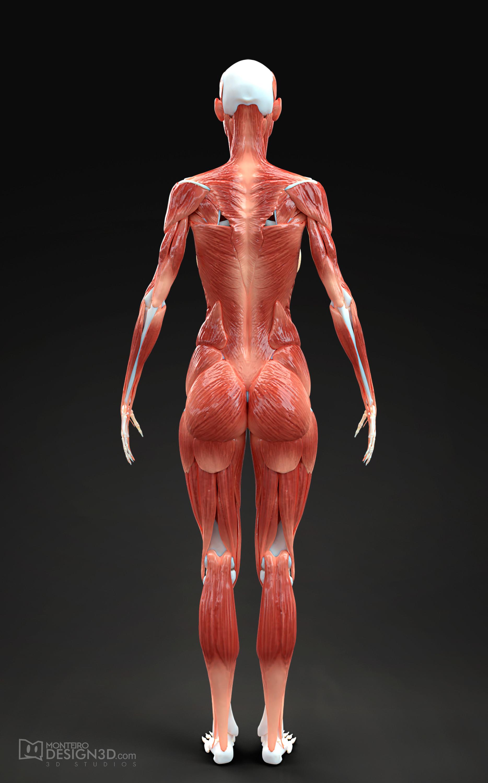 Alisson monteiro musculatura fem back