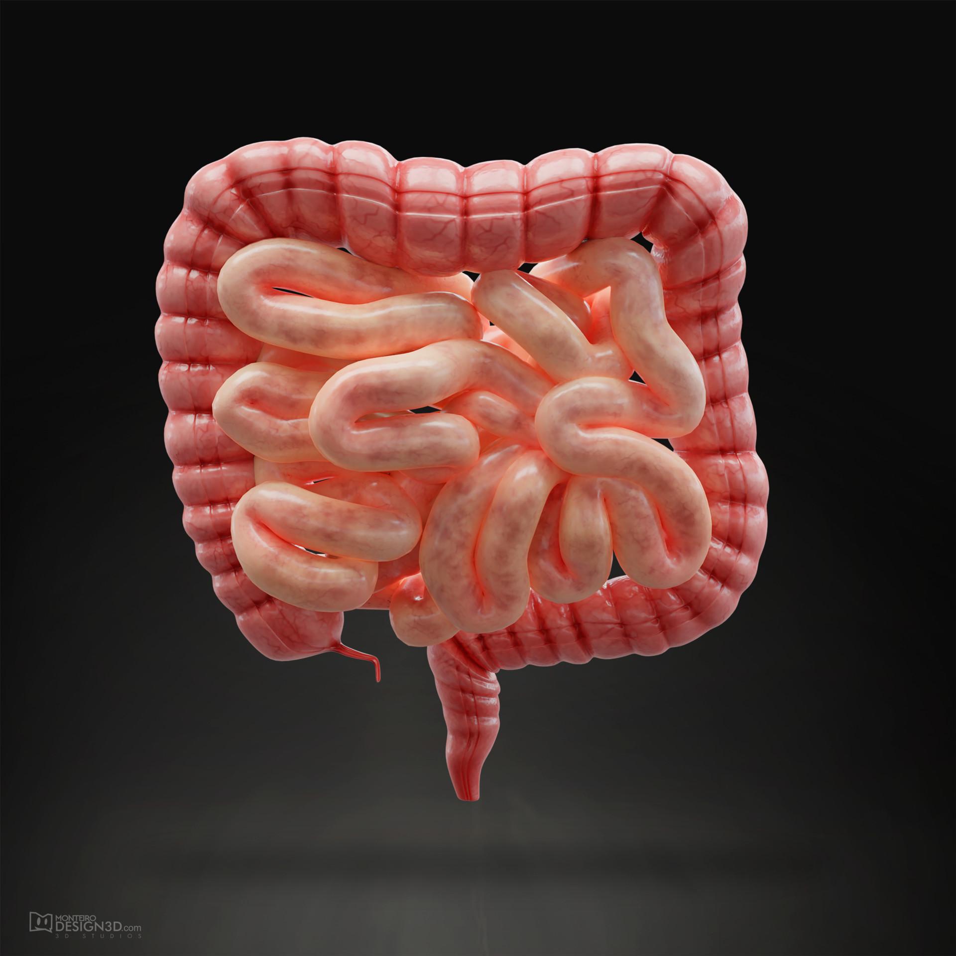 Alisson monteiro intestine 3d