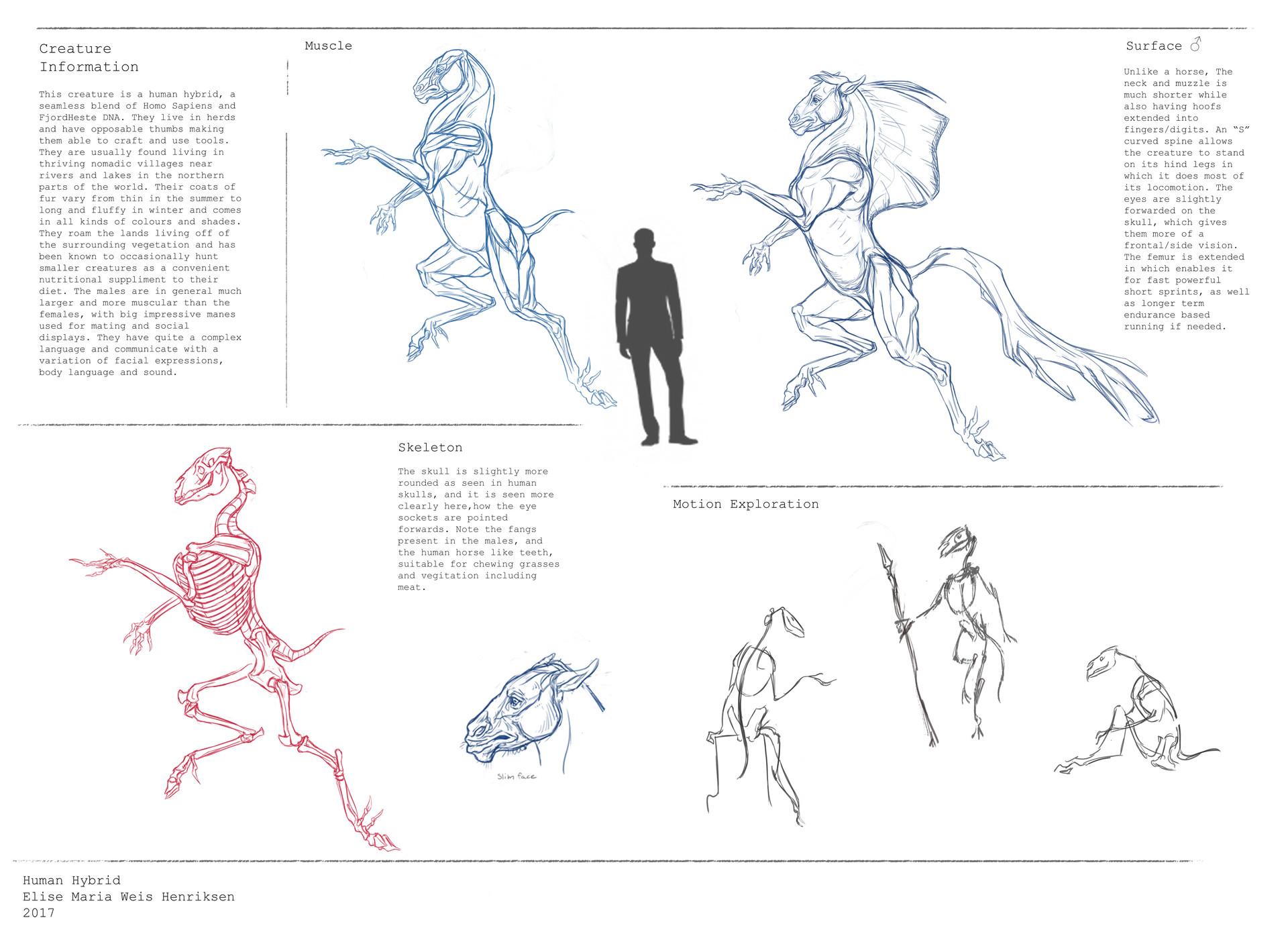 Elise Maria W. Henriksen - Creature Anatomy Course assignment 02 ...