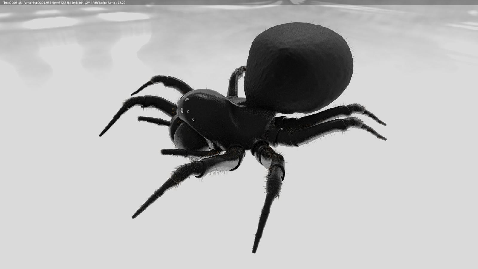 Spider Side