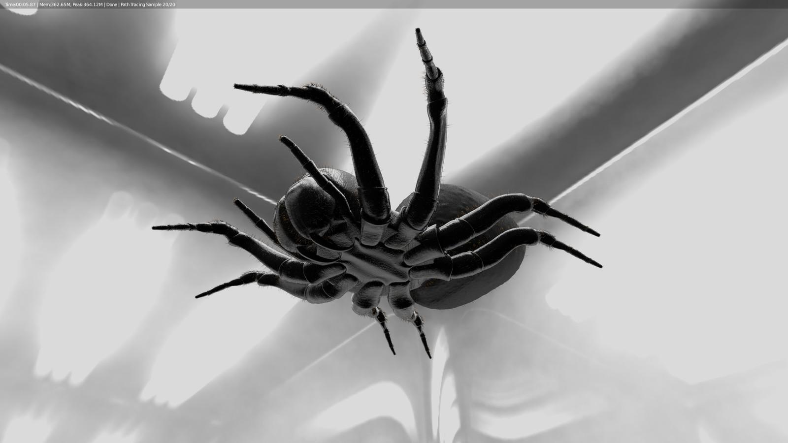 Spider Bottom