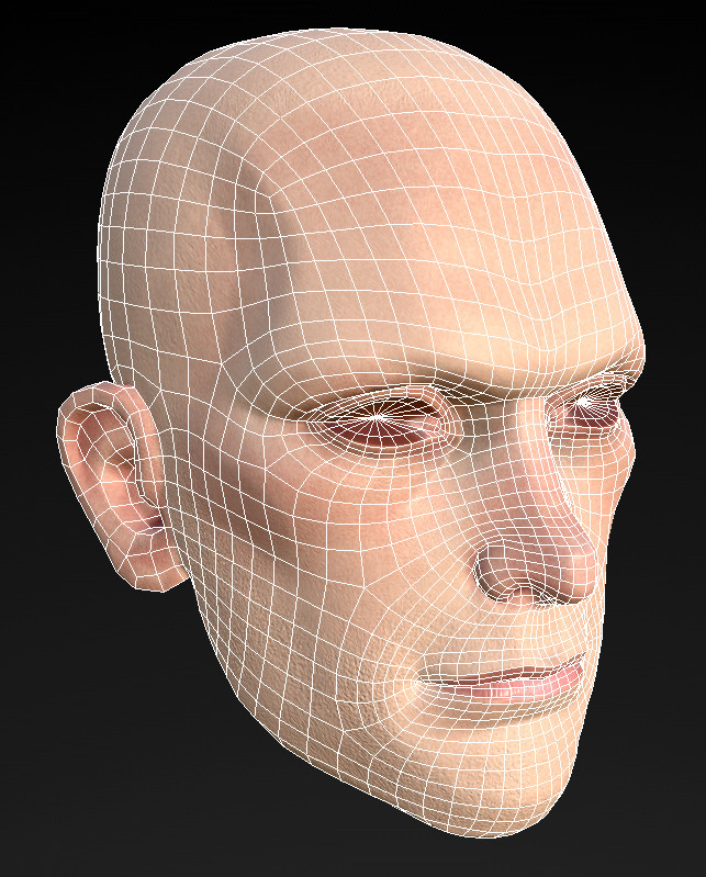 Shawn witt headtopology