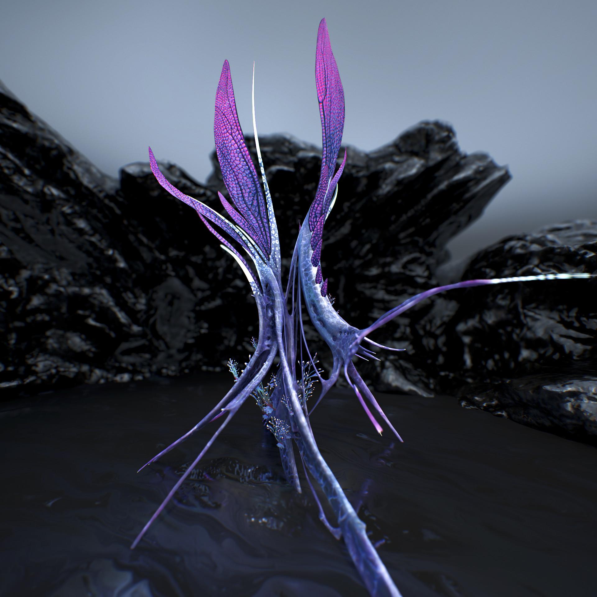 Johan de leenheer alien fern misota spletinus51
