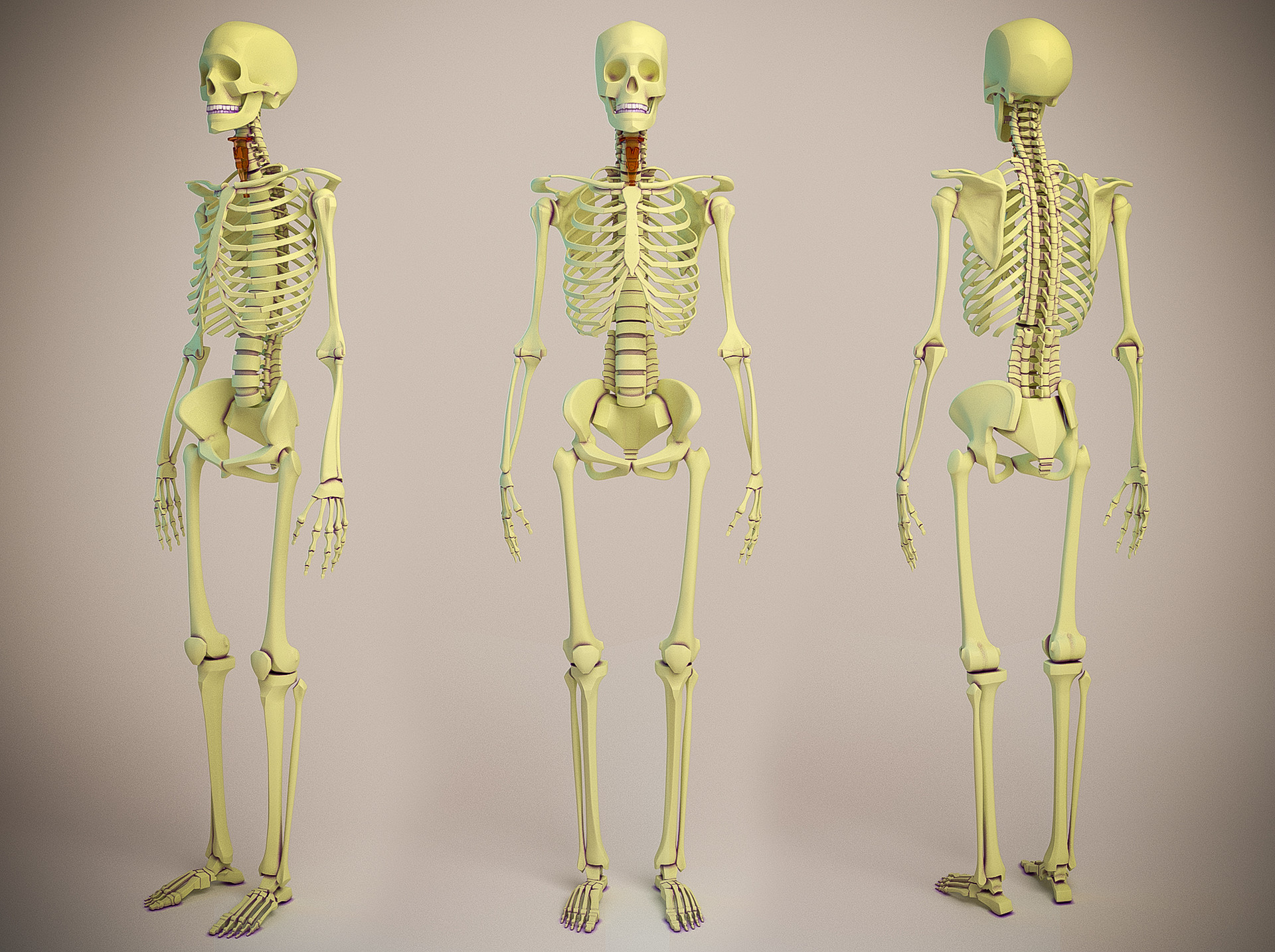 Aleksandrs k skeletons jpg