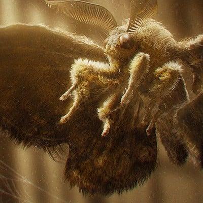 Asx manzoor moth