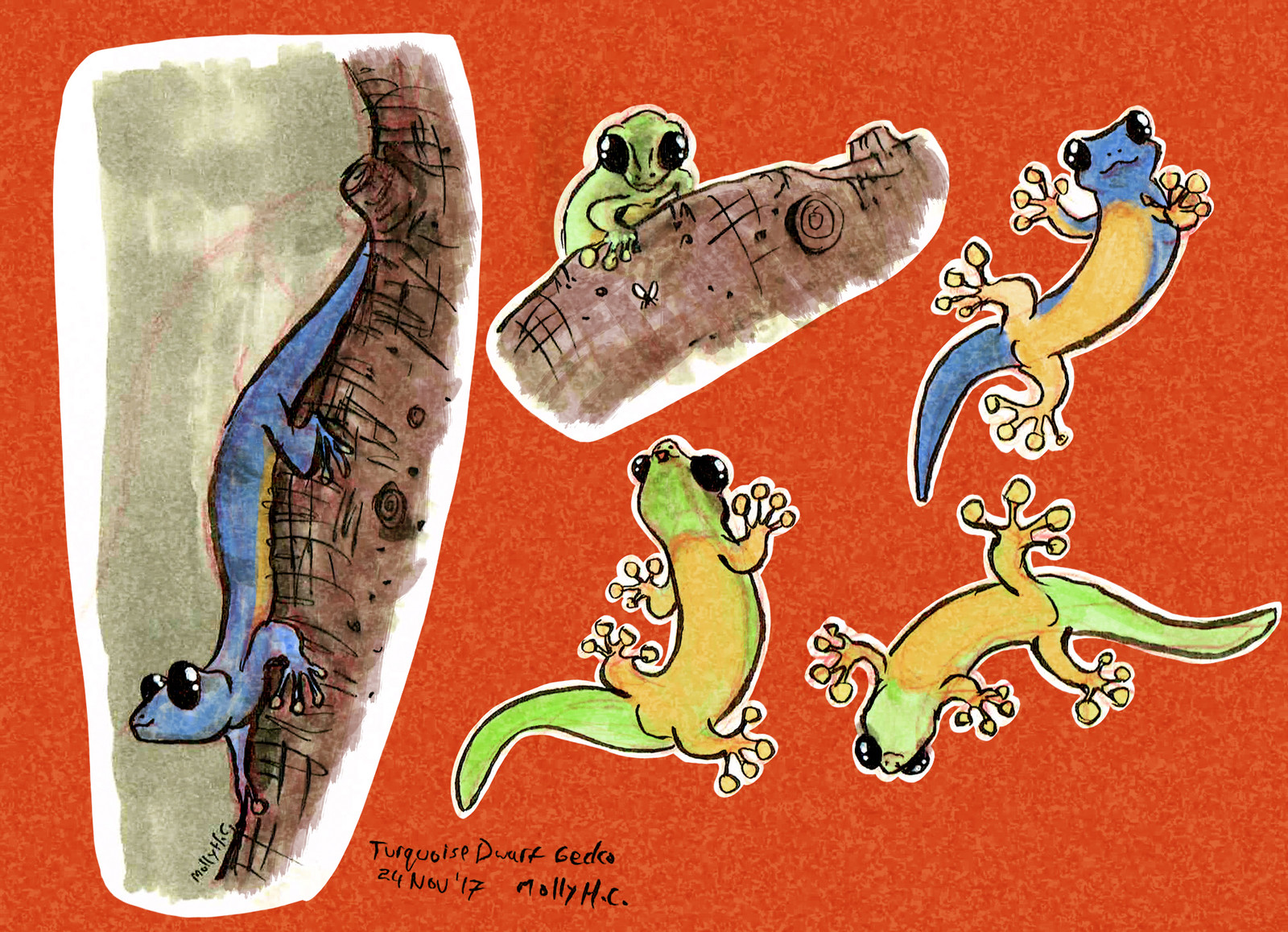 Malaysian Dwarf Gecko Character Concepts