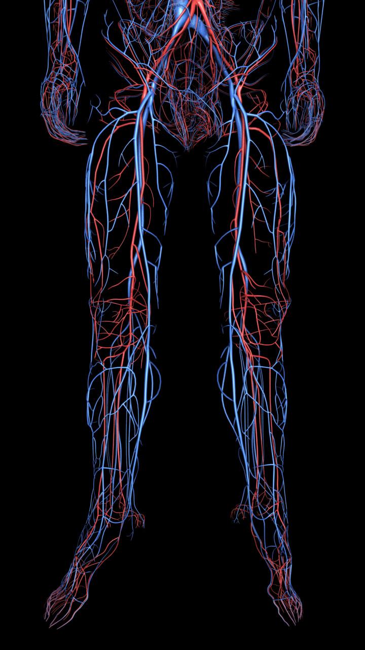 Ken calvert cardiovascular lower