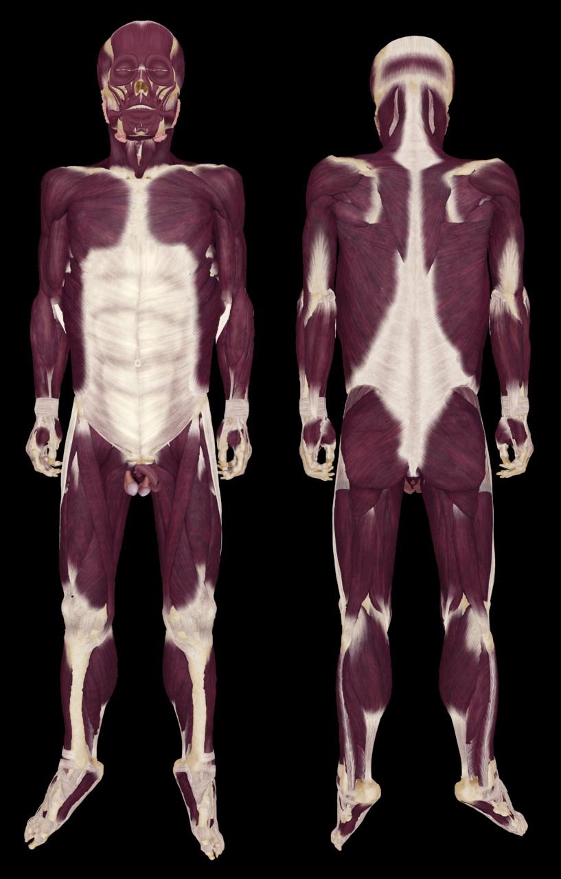 Ken calvert vk muscles