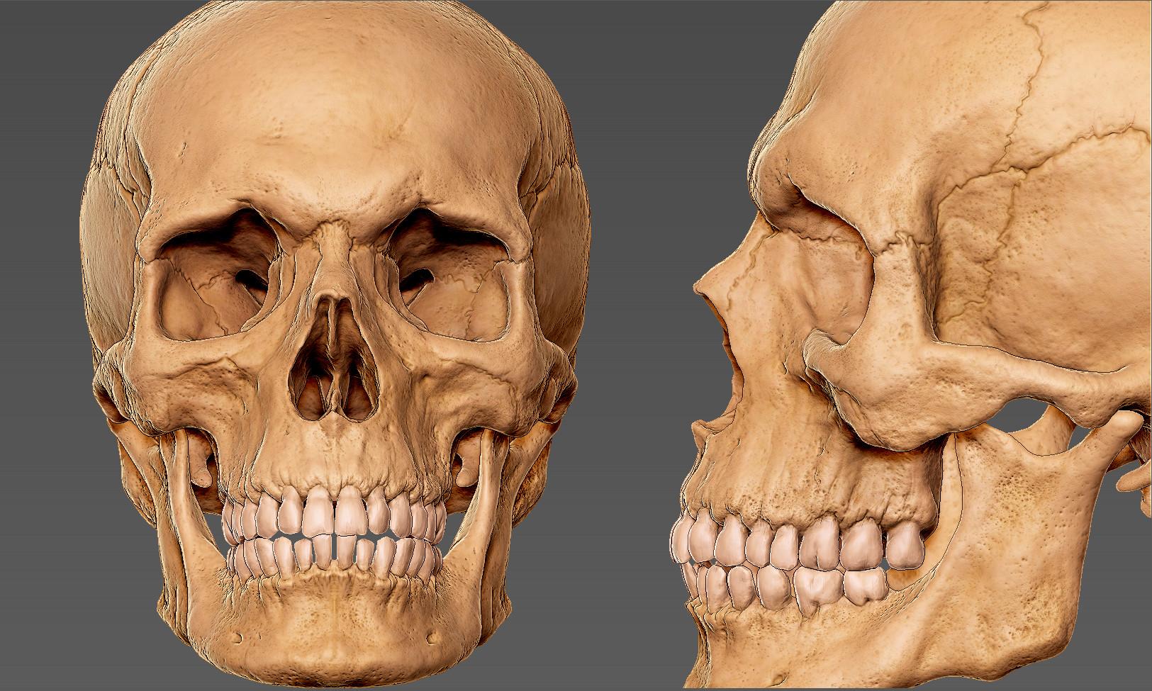 Andrey gritsuk skull