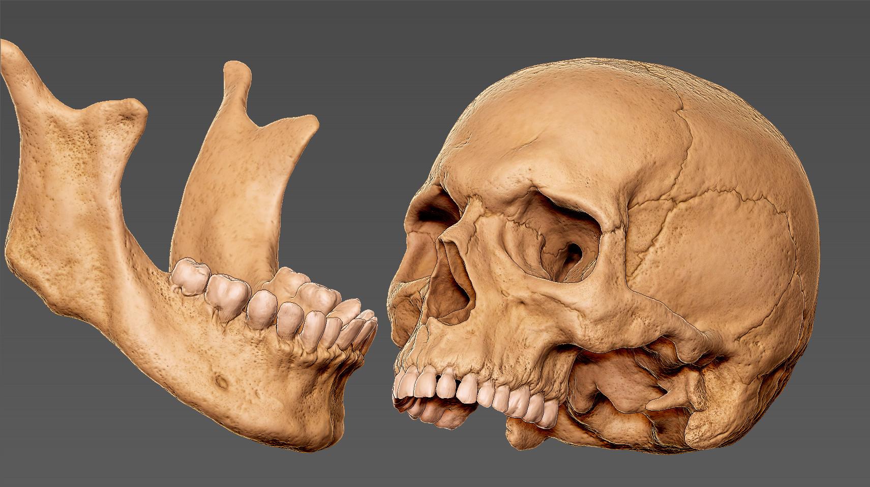 Andrey gritsuk skull 4