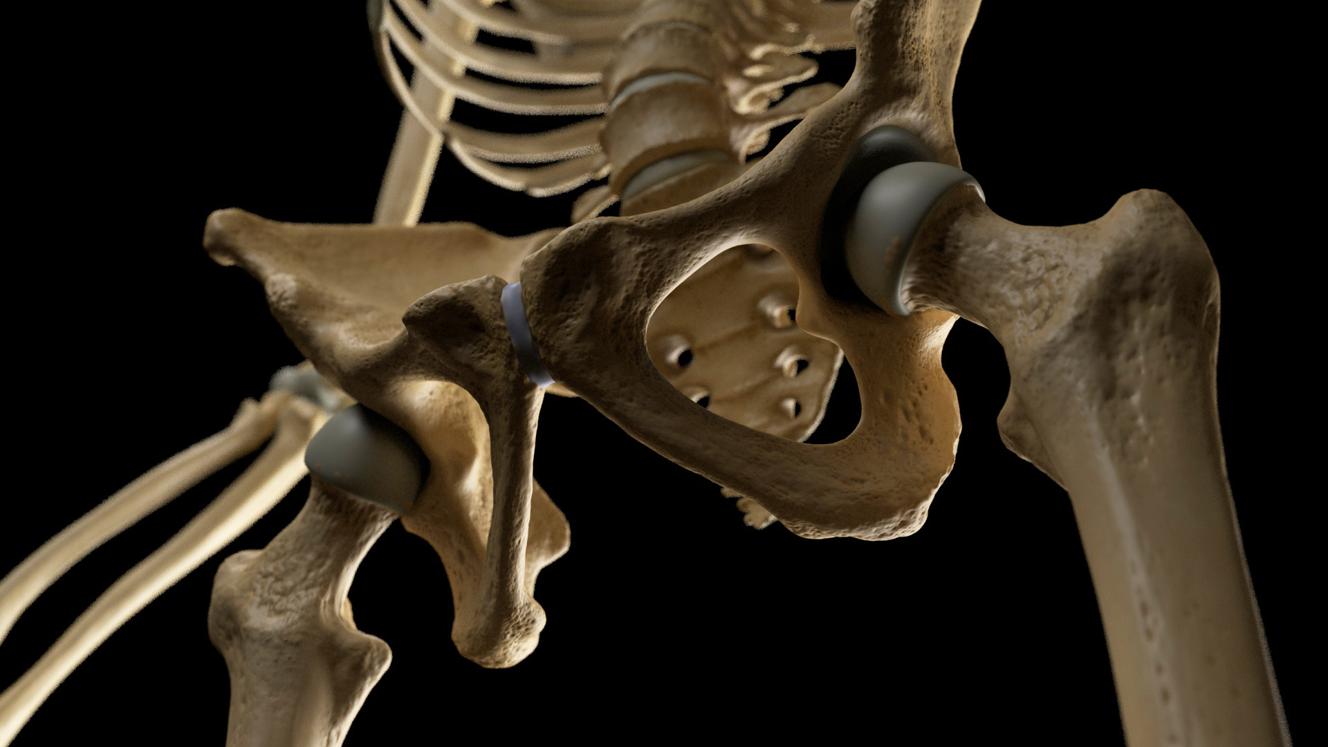 Andrey gritsuk skeleton 2 edit