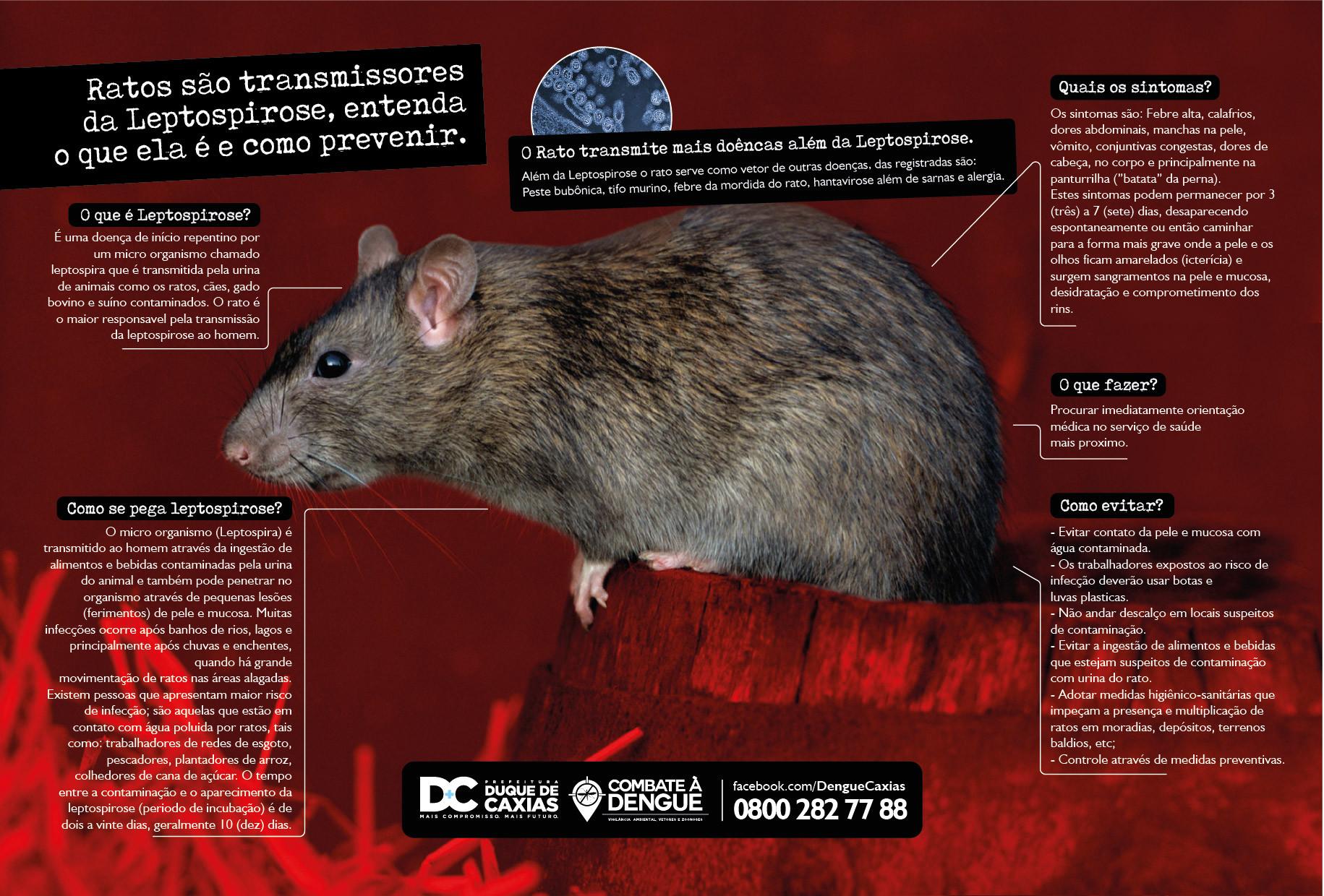 Leandro calazans folder rato 05