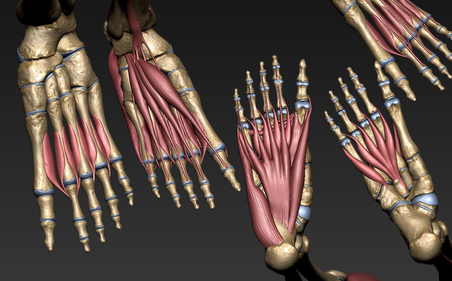 Andrey gritsuk leg muscles 1