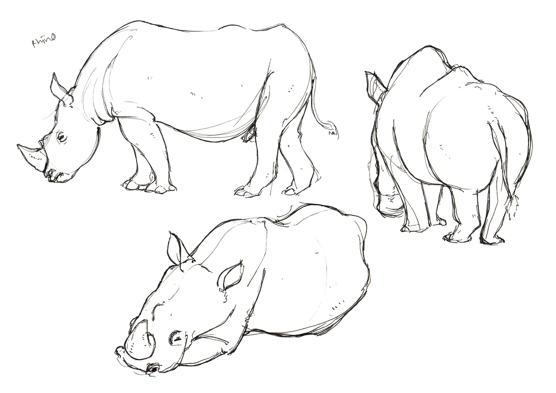 Artstation Zoo Drawing Lim Wai Yee