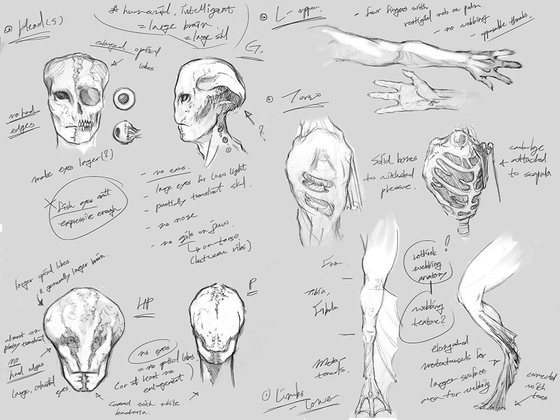 Sketch: Anatomy