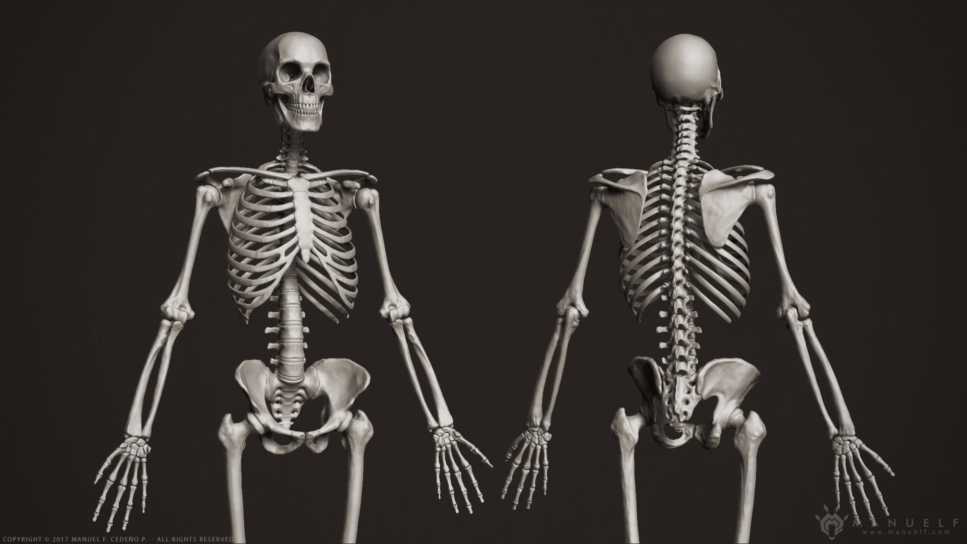 Manuel F. Cedeño - 3D Human Skeleton