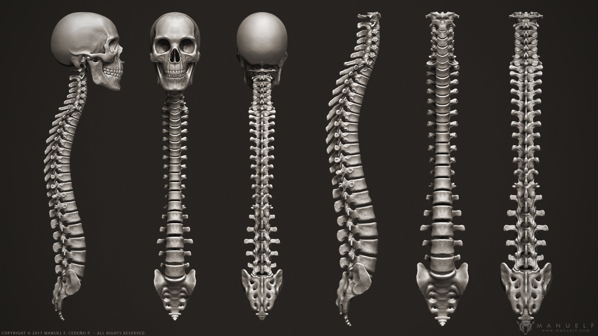Artstation 3d Human Skeleton Manuel F Cedeo