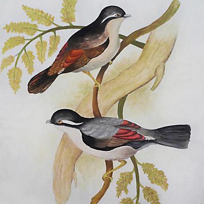 Rajesh r sawant birds2