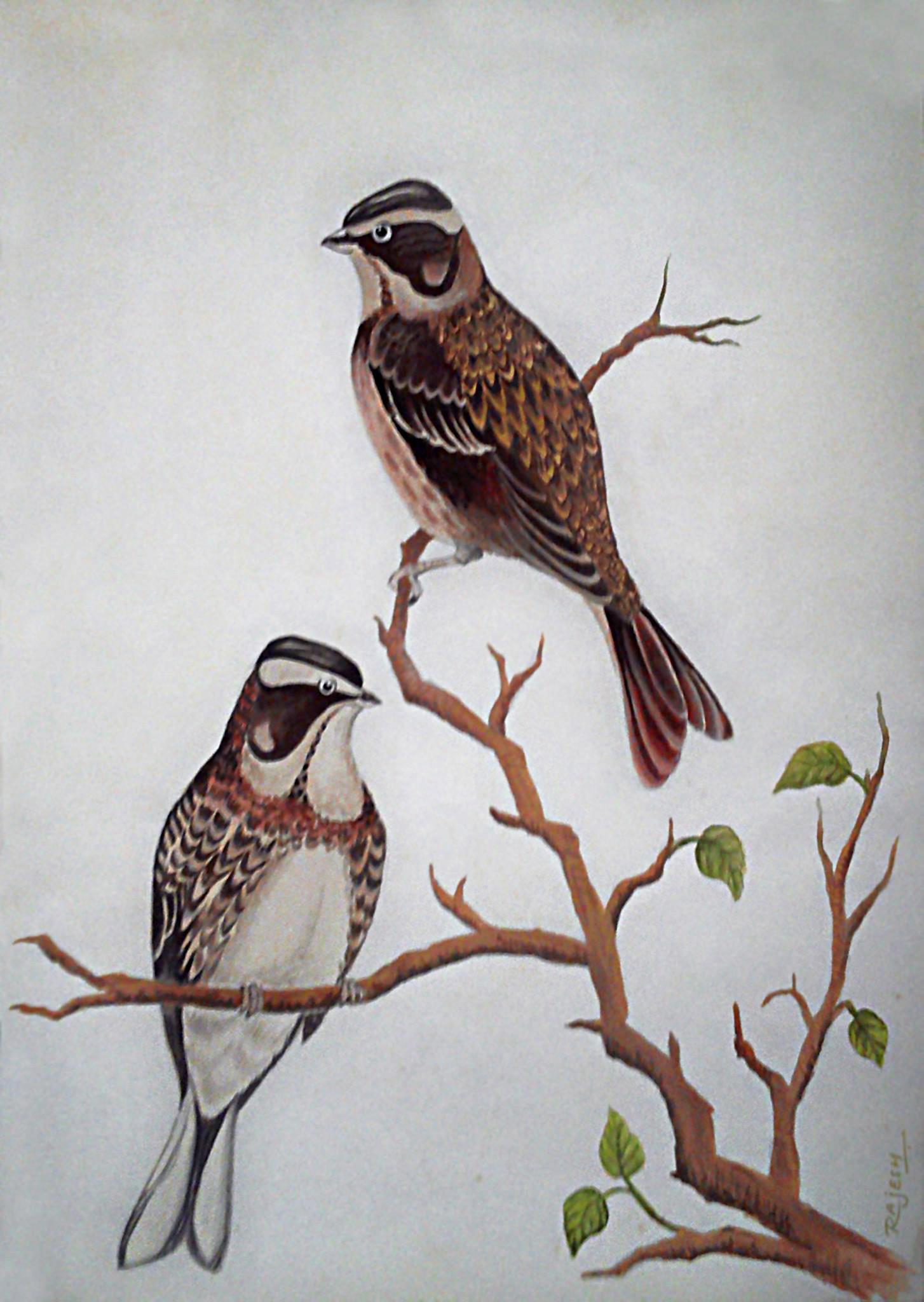 Rajesh r sawant birds1