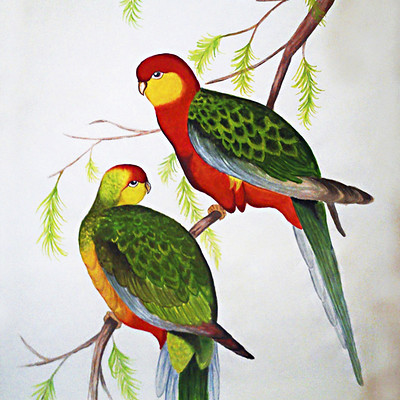 Rajesh r sawant birds 3
