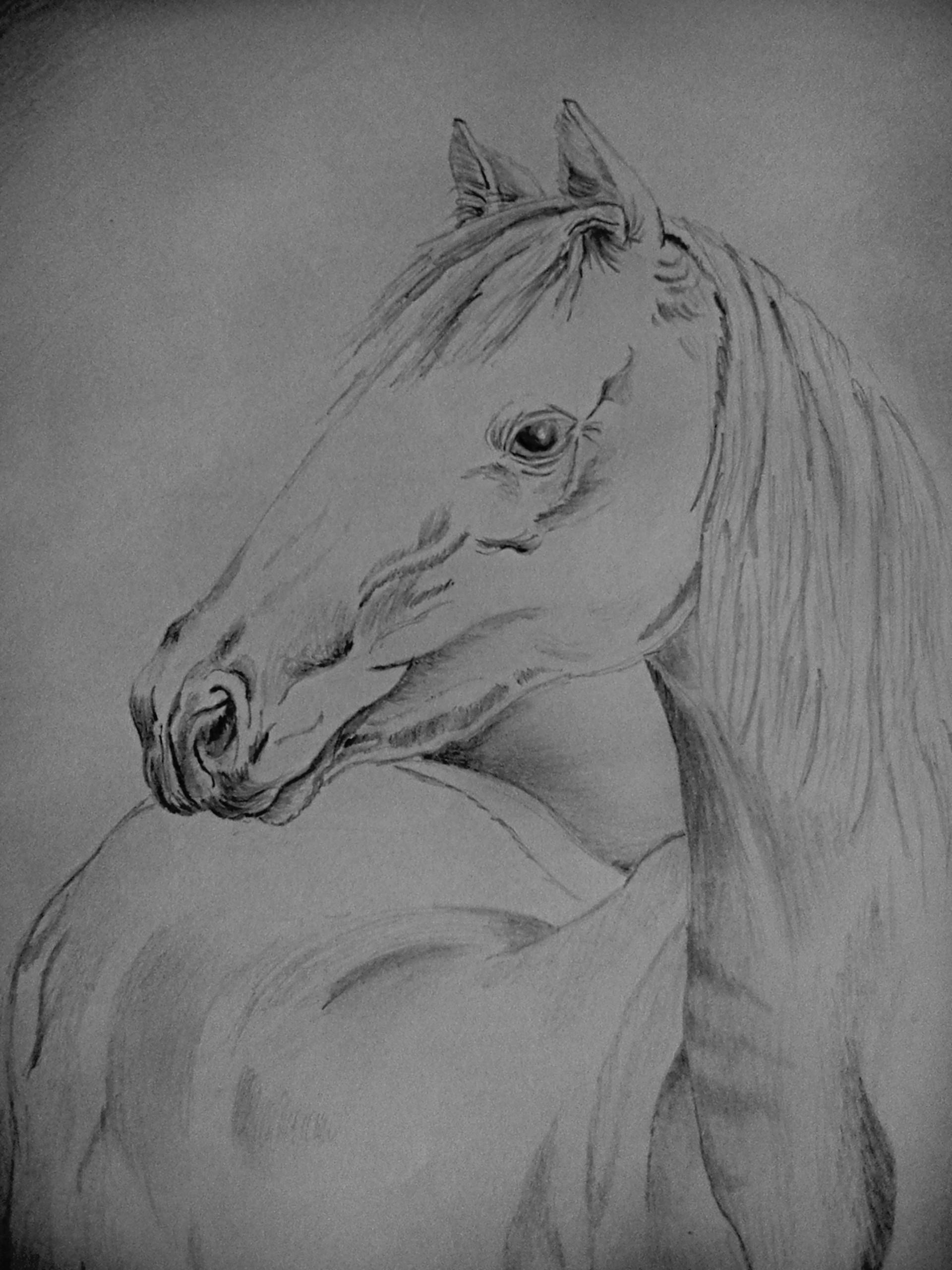Rajesh r sawant horse2