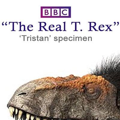 Fred wierum bbc rex remodel4