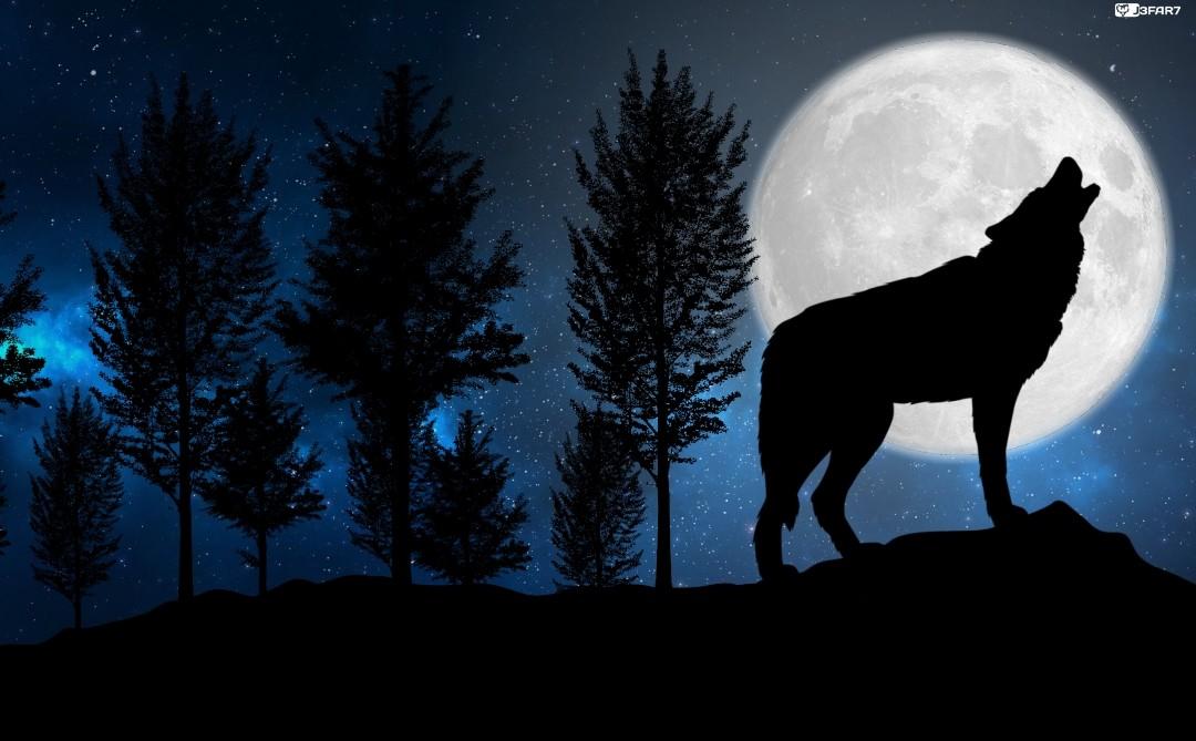 Cesar Jaffar Wolf Background