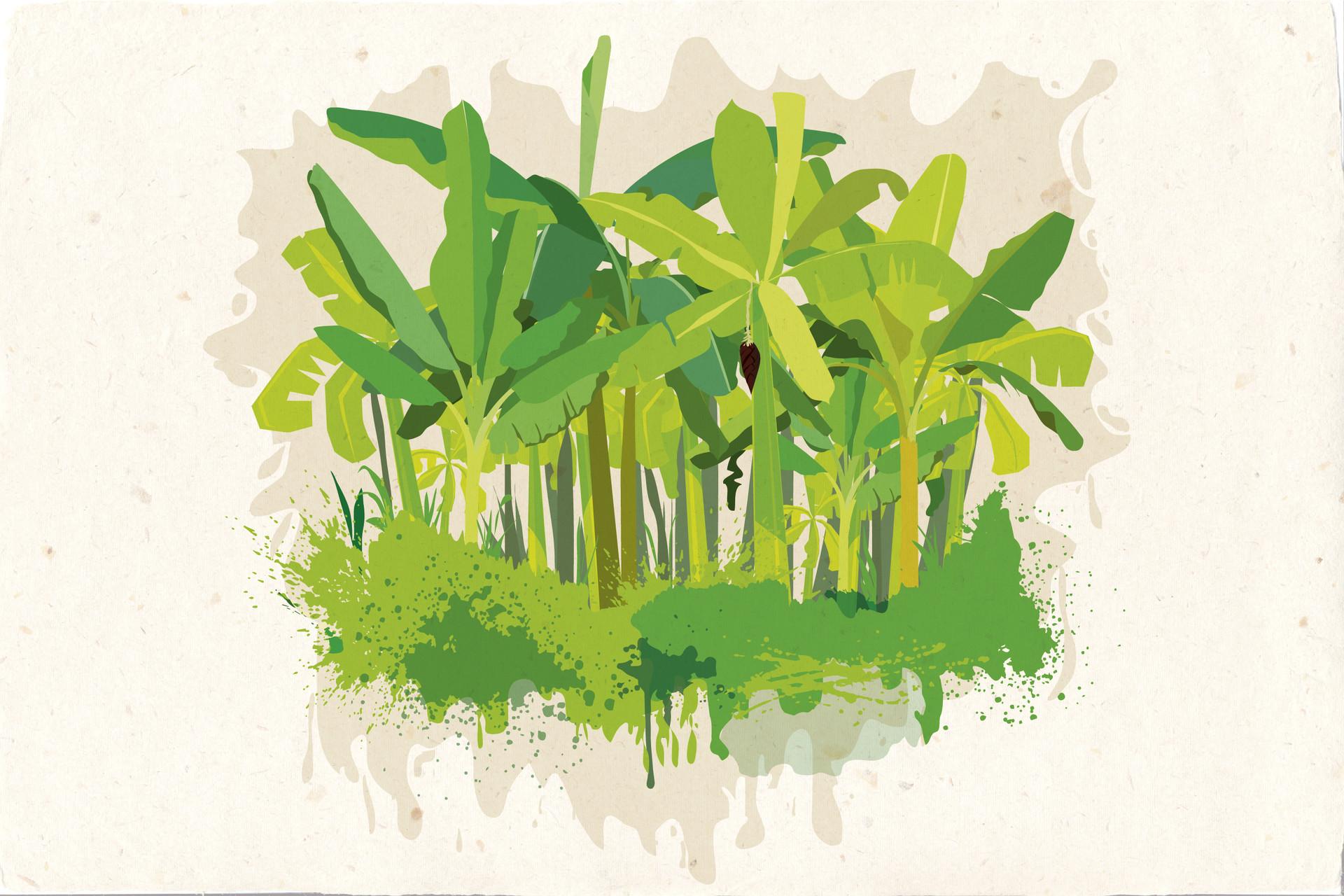 Rajesh r sawant banana trees 12 x 18 01