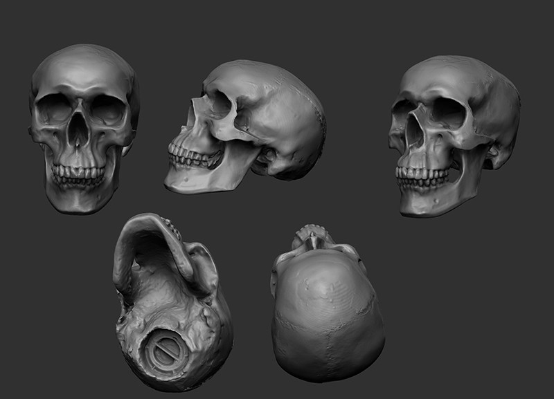 Human Skull sculpt (Based on a moneybox I bought)