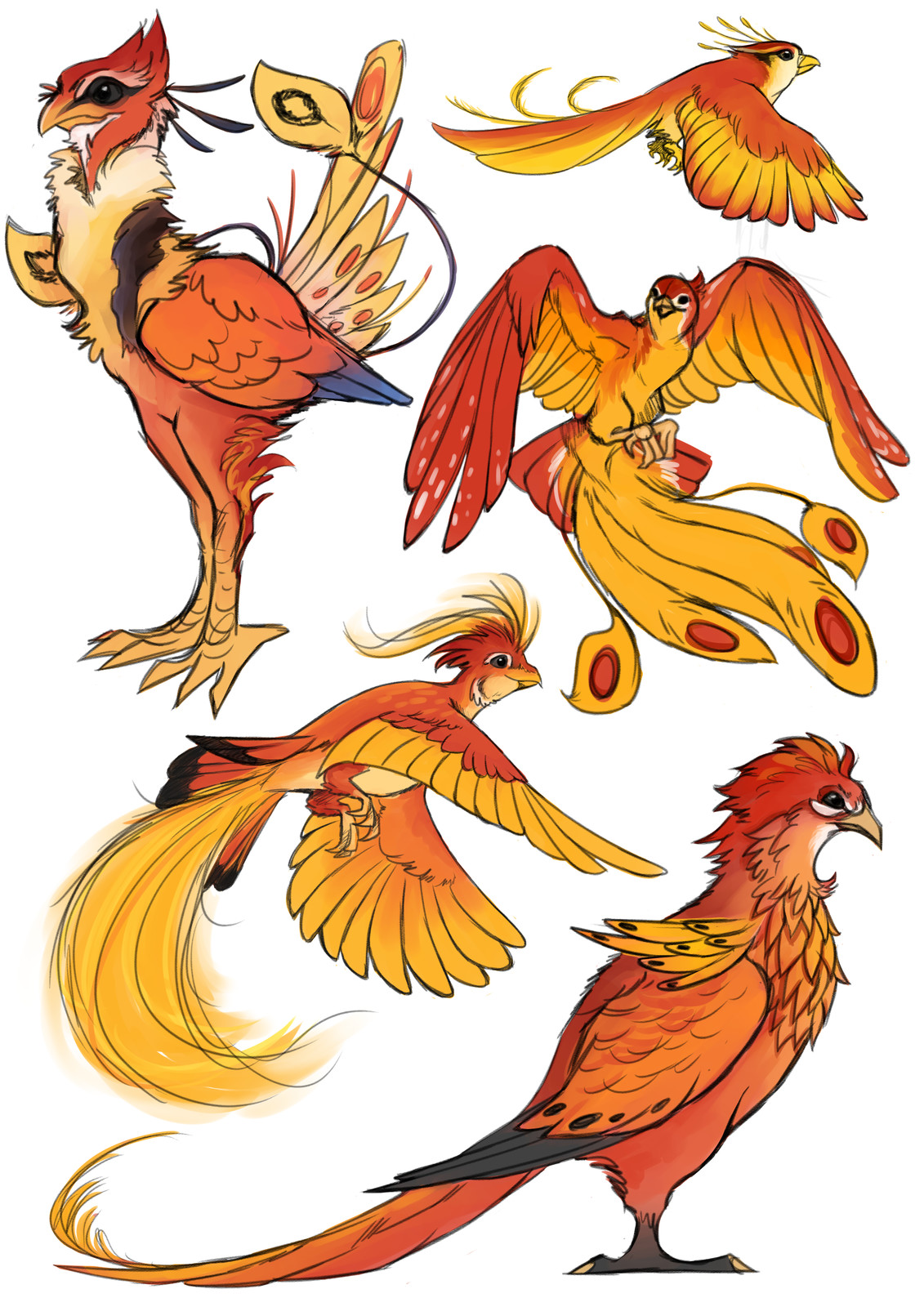 phoenix concept doodles, some heavily referencing photos of actual birds, but with a bunch of elements changed.