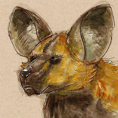Molly heady carroll africanhuntingdog