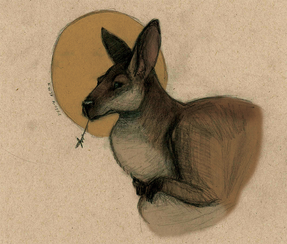Wallaby Portrait