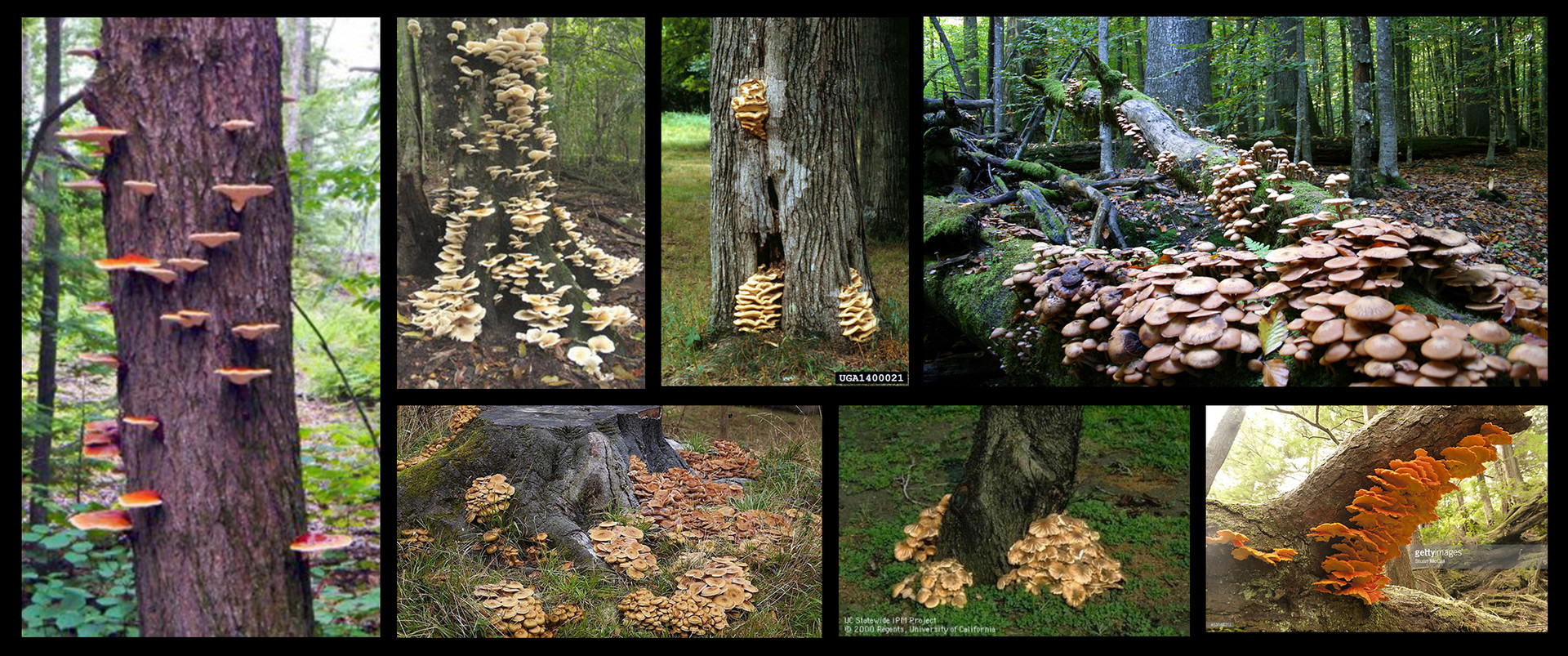 I started the project with this collection,to discover the behavior of different fungus: how and where they grow.